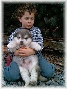 ALASKAN MALAMUTE PUPPIES 14